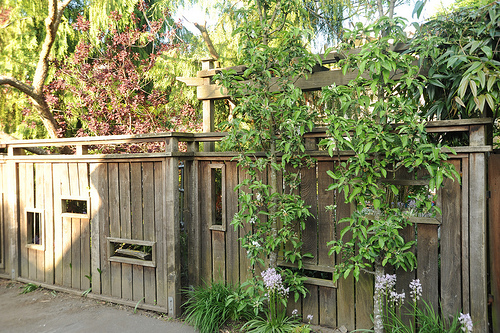Property Fence Wood Vs Vinyl Discover Home Improvement