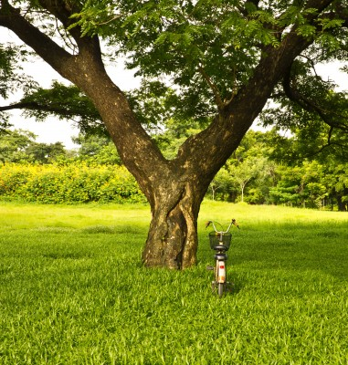 2 Situations Where You Really Should Call a Tree Care Expert