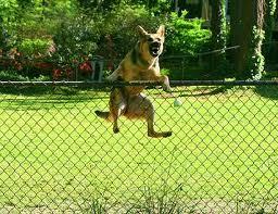 Make Sure the Dog Fence You Install Suits the Breed of Your Dog