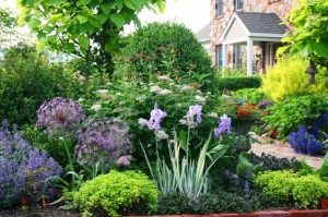 How Pest Control Can Help Your Garden Thrive