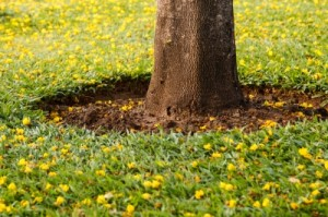 What's the Difference between Tree Trimming and Tree Pruning?