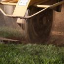 Stump Grinding Services vs. Stump Grinder Rental